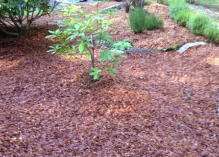Mulch is an easy inexpensive way to improve the look of your landscape. Mulching around trees not only cleans up the look and hides roots... Mendocino County   Alex's Gardening Service