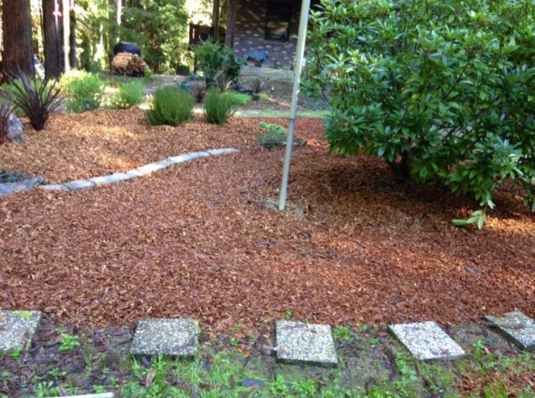 Poison Oak Removal Services of Mendocino County. Poison Oak Removal Services of Lake County. Poison Oak Removal Services of Humboldt County | Alex's Gardening Service