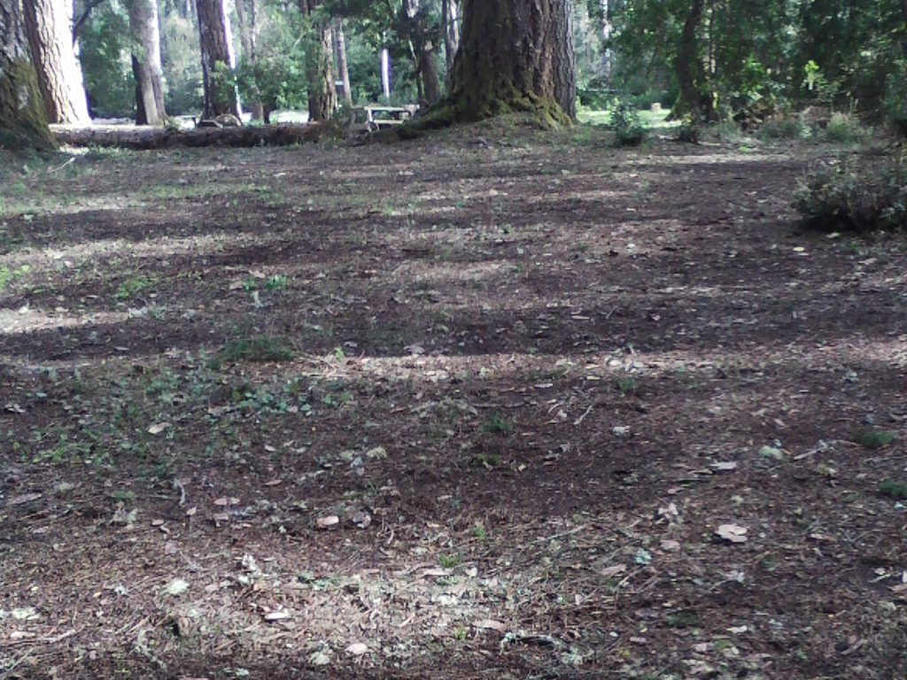 Residential Yard & Lawn Clean-Up Services for Mendocino County. A full spring cleanup will leave your yard ready for all of your outdoor activities.  | Alex's Gardening Service