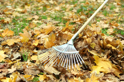 Lawn Care & Landscape Clean-Up. Fall clean-ups get rid of leaves and organic matter that build up when the weather turns cold and leaves start falling.   Alex's Gardening Service