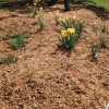 Have us add the mulch to your soil, and see the improvements for yourself! | Alex's Gardening Service