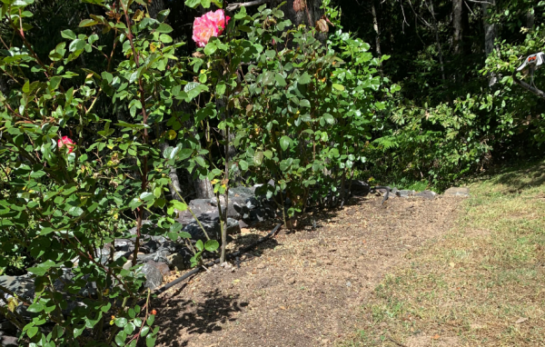 Mendocino County garden maintenance services | Alex's Gardening Service