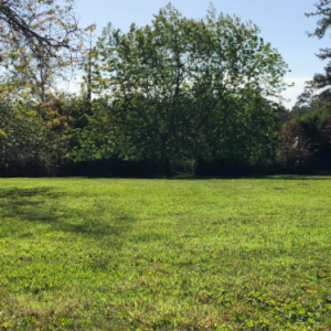 Monthly Lawn Maintenance Services. Mendocino County Property Maintenance Services | Alex's Gardening Service