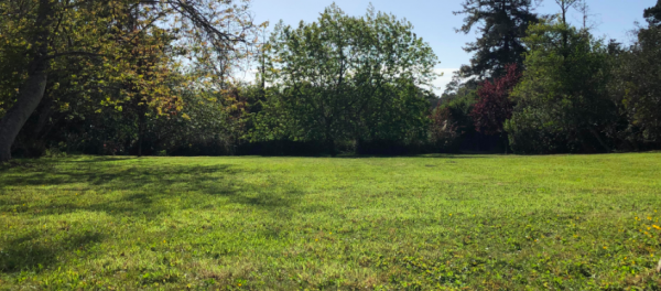 Monthly Lawn Maintenance Services. Mendocino County Property Maintenance Services   Alex's Gardening Service
