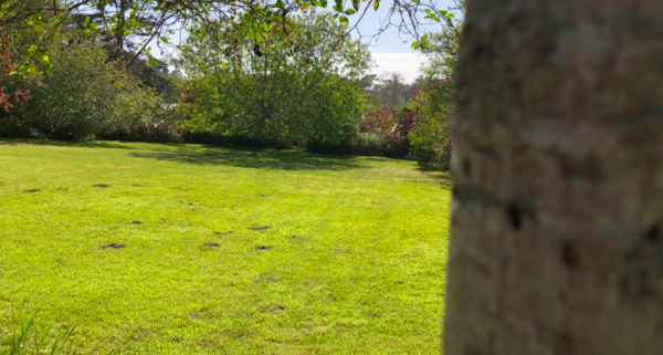 Let us handle your lawn care for you. We'll make your yard look beautiful all year long. | Alex's Gardening Service